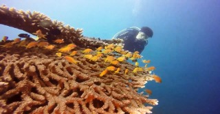 Philippines Diving 2019-01-02.mp4_20190102_155927.796.jpg